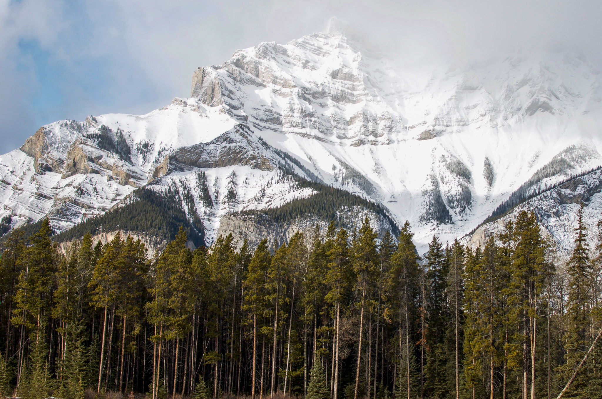 Snow covered mountain in the Canadian Rockies with jagged, misty peak. Tall and thin coniferous trees sit in front of the mountain, providing contrast.