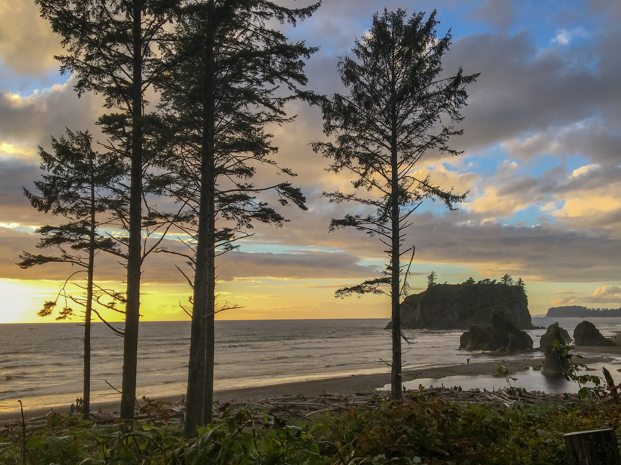 Looking through tall, skinny trees onto beach with sea stacks and rolling waves. Sun is setting and sky is yellow